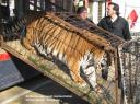 tigreblog1.jpg