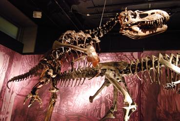 albertosaurusblog.jpg
