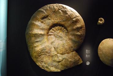ammoniteblog.jpg