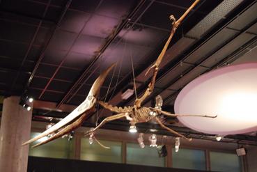 pteranodonblog.jpg