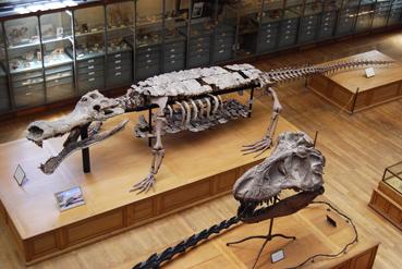 sarcosuchusblog1.jpg