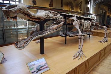 sarcosuchusblog2.jpg
