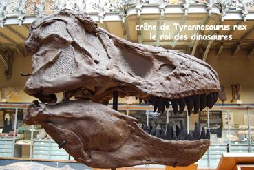 tyrannosaurusblog.jpg