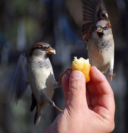 oiseaux-nd-blog