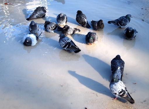 pigeons-notre-dame-blog