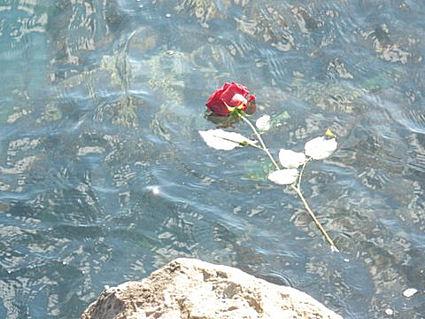 roseblog