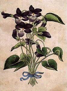 pere-la-violette