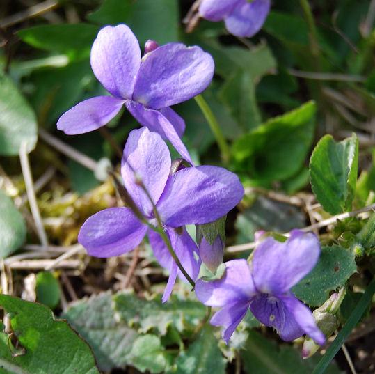 violetteblog3