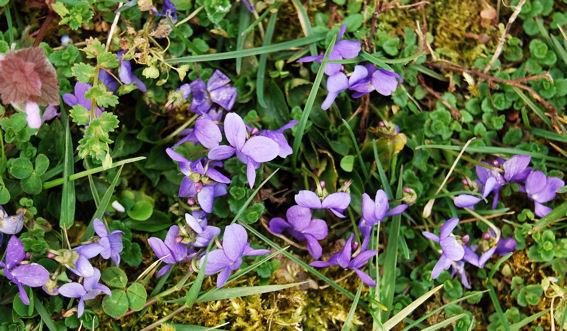 violetteblog4