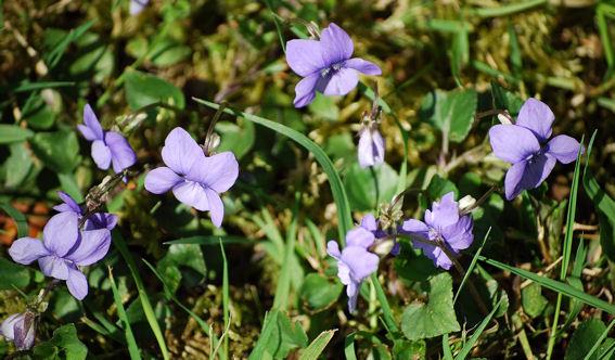 violetteblog6 dans Leçons de choses