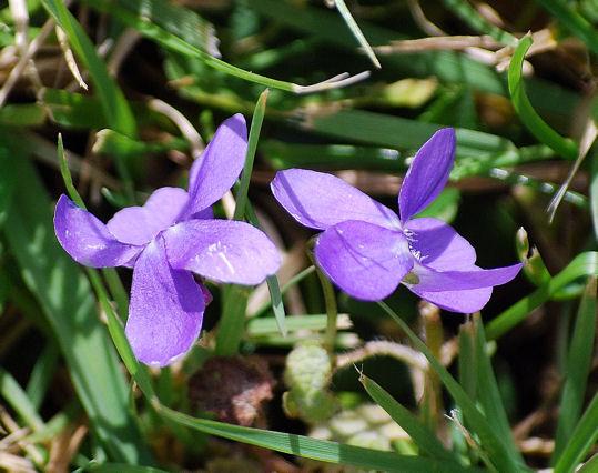violetteblog9