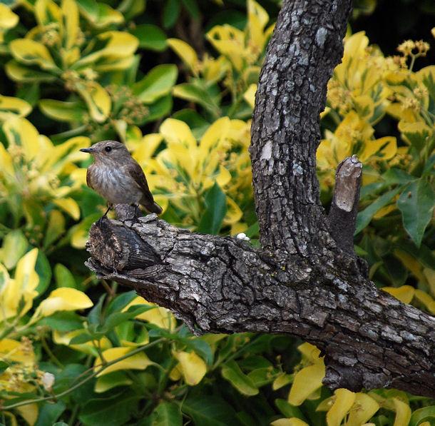 Oiseaublog