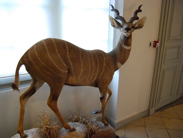 Musée Chasse blog15