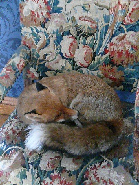 Musée Chasse et Nature38 renard