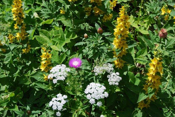 Murbach jardin blog5