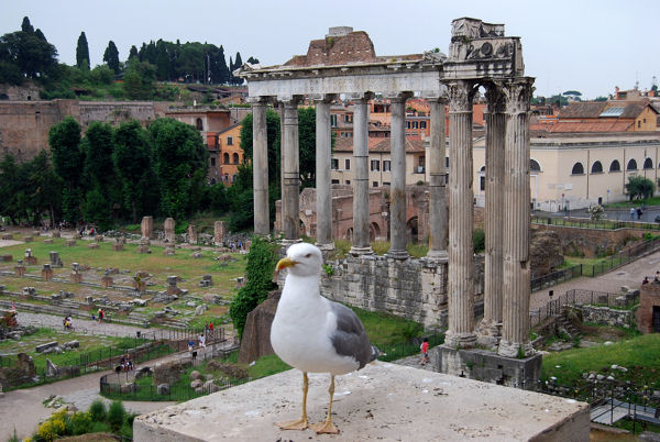 Capitole blog 16