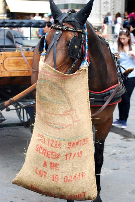 Duomo blog 9 cheval
