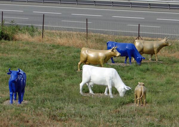 vaches autoroute