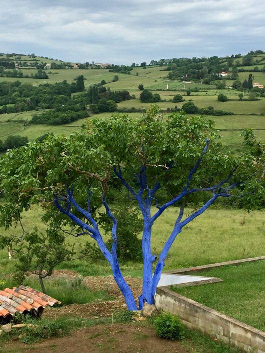 Blog arbre bleu Beaujolais